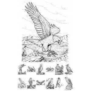 (24 cards normal book size) Birds Of Prey
