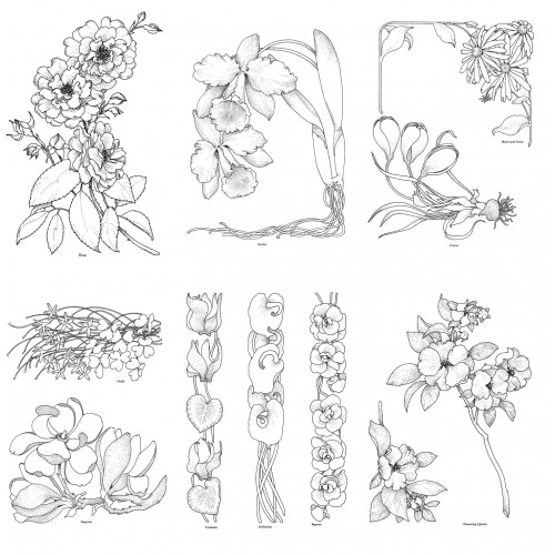 Adult Coloring Book Flowers And Wildflowers