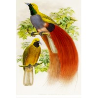 "Birds of Paradise 0697 Vintage Birds Waterslide Decals (4pcs 2.5""x3.5""each)"