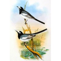 "Black and White 0698 Vintage Birds Waterslide Decals (4pcs 2.5""x3.5""each)"