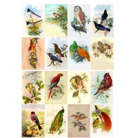 "Amazing Birds // Decoupage Paper Pack (10sheets A4 / 8""x12"")"