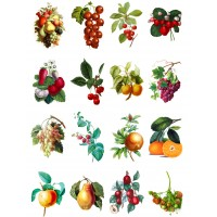 "Fruit and Veges // Decoupage Paper Pack (10sheets A4 / 8""x12"")"