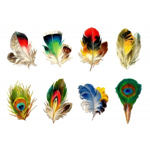 "Stickers (each sticker 2.5""x3.5"", pack 6 pcs) Feather Peacock FLONZ Vintage"