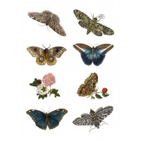 "Stickers (each sticker 2.5""x3.5"", pack 8 pcs) Vintage Butterfly Drawing"