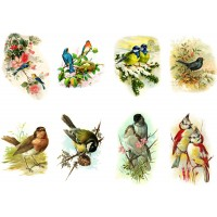 "Stickers (8 pics 2.5""x3.5"" each) Vintage Birds Garden Feather"