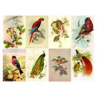 "Stickers (8pics 2.5""x3.5""each) Vintage Birds Peacock Parrot"