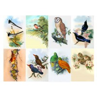 "Stickers (8pics 2.5""x3.5""each) Vintage Birds Owl exotic"