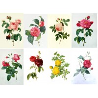 """Stickers (8pics 2.5""""x3.5""""each) Vintage Roses Flowers Garden"""