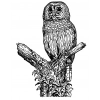 "Owl at Old Tree (2.5"" x 3"")"