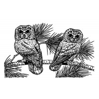 "Two Owl on Pinetree (2.5"" x 4"")"