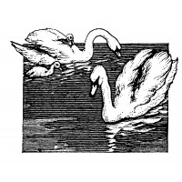 "Swans on Lake Engraving (2.5"" x 3.5"")"