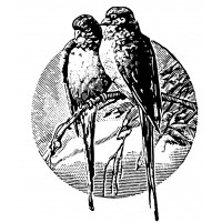 "Two Birds on Branch Engraving (2.5"" x 3.5"")"