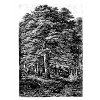 "Old Tree Forest Bush Engraving XXL (3.5"" x 5"")"