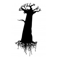 """Baobab with big Roots (2"""" x 2.5"""")"""